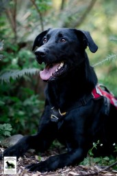 Conservation canine Ranger. Photo by Jaymi Heimbuch