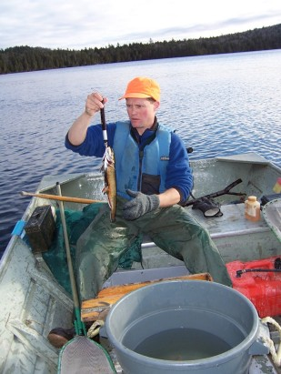 Frank Frost surveying for wild spawned charr and coming up successful. Credit: Maine DIFW